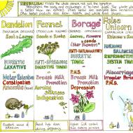 Woman's Healing Herbs Chart